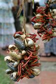 picture of ares  - Dried and died crabs ares strung together and used as decore  - JPG