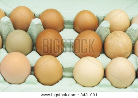 Fresh Free-Range Chicken Eggs