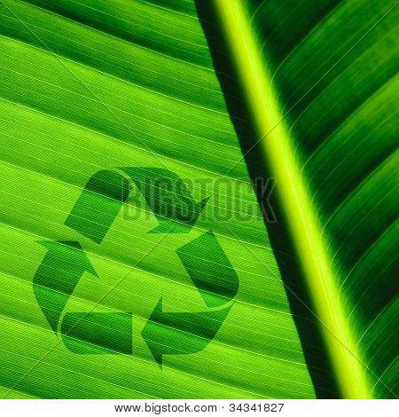 Beautiful palm tree leaf background and recycle logo