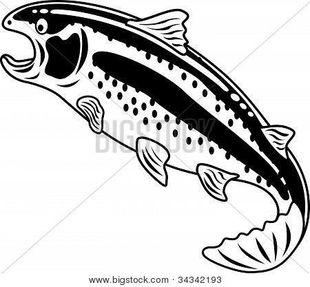Rainbow Trout Black And White