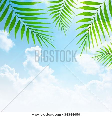 Holidays background, blue sky and palm tree green fresh branches collage, abstract natural floral border, summer travel and vacation, paradise beach getaway, zen relaxation concept