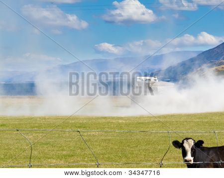 Cow watch truck apply fertilizer on pasture field
