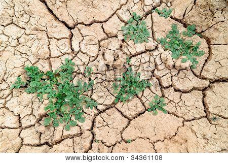 Hierba seca.