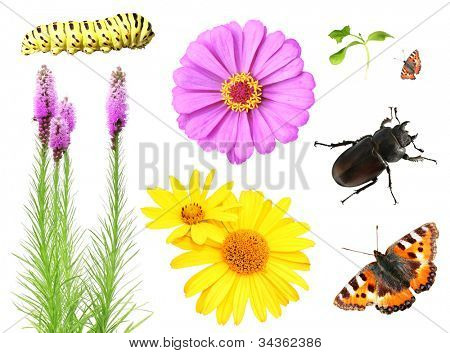 Collection of flowers and insects. Isolated over white