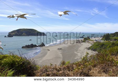 Oregon Coast And Beaches And Seagulls.