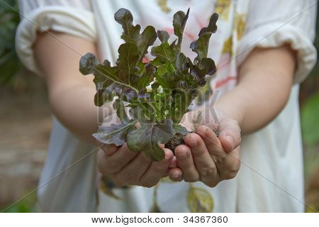 Lady Hand Holding A Fresh Young Plant.