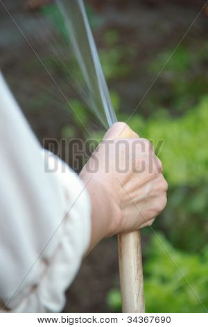 Young Attractive Woman Watering The Plants