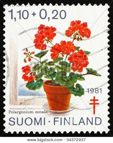 Postage stamp Finland 1981 Geranium, Pelargonium Zonale