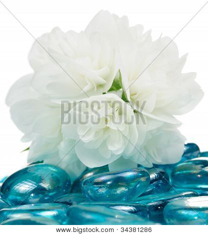 Delicate White Jasmine Flowers On Blue Glass Stones