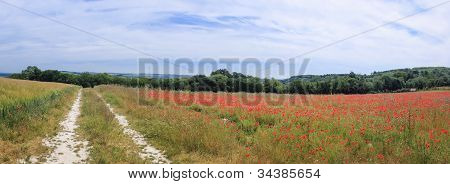 South Downs Poppy Flowers England