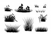 Set Of Black Grass Silhouettes Isolated On White Background. Collection Of Meadow Grass And Herbs Si poster