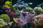 Reef And Tropical Fishes Hobby. Colorful Marine Plants And Animals In The Marine Aquarium. poster