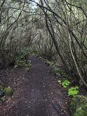 La Zarza Nature Park With Path In Beautiful Mysterious Laurel Forest, Laurisilva In The Northern Par poster