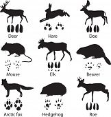 pic of animal footprint  - Animals and its tracks - JPG