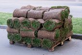 Rolls Of Natural Lawn With The Ground Stacked On Pallets In A Stack. Horizontal Photo Format poster