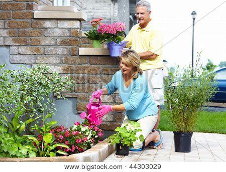Feliz pareja senior en el jardín. Jardinería.
