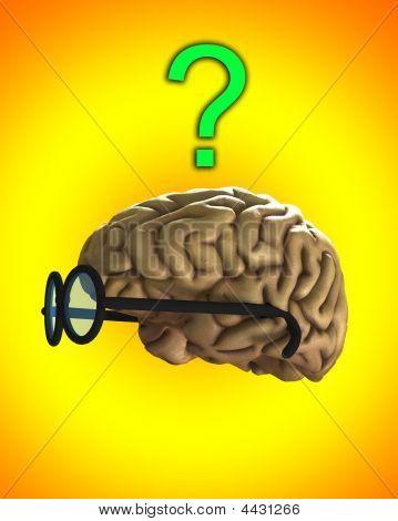 verwechselt clever Gehirn