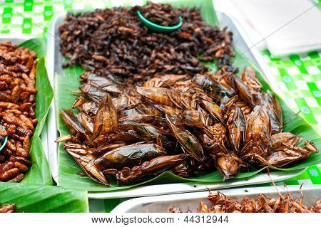 Thai Food At Market. Fried Insects Grasshopper For Snack