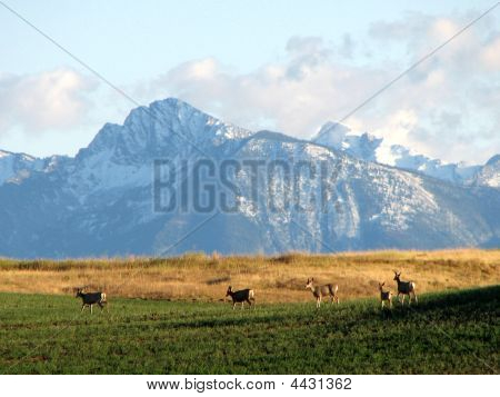 Montana Scenery And Wildlife