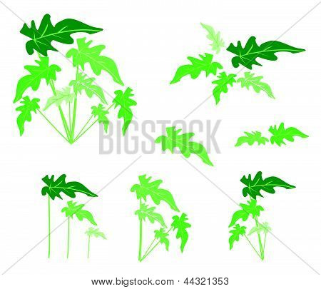 A Set Of Philodendron Leaves On White Background