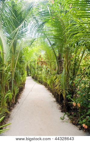 Walkway Path Through Tropical Jungle To Beach  Resorts Little Corn Island Nicaragua Central America
