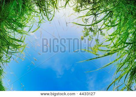 Has Fallen In A Grass