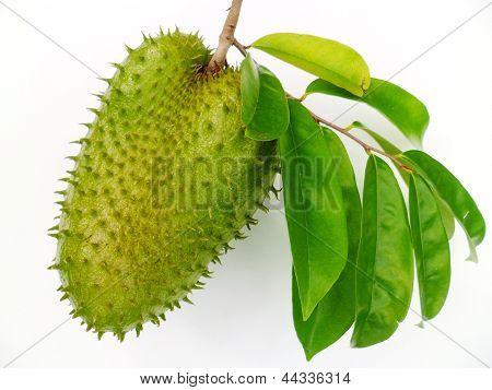 Soursop (Annona muricata)