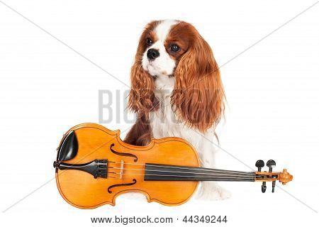 adorable dog with a violin