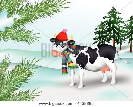 Cow In Winter Coniferous Wood