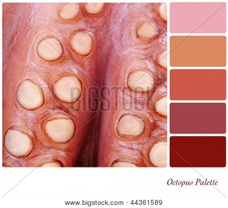 A background closeup of ocopus tentacles in a colour palette with complimentary colour swatches.