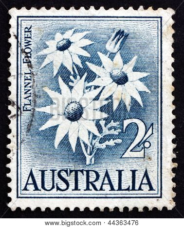 Postage Stamp Australia 1957 Flannel Flower, Herbaceous Shrub