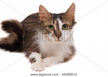 Cat on studio white background