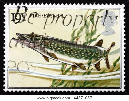 Postage Stamp Gb 1983 Pike Fish
