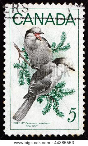 Postage Stamp Canada 1968 Gray Yay, Bird