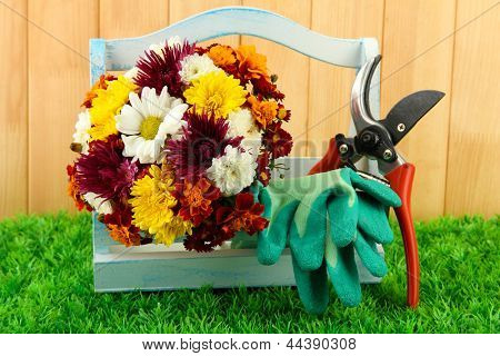 Secateurs with flowers in box on fence background