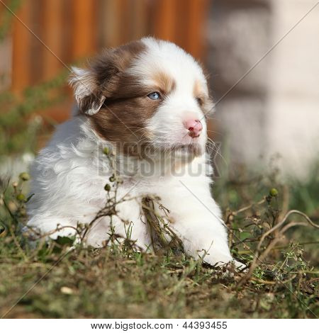 Nice Little Puppy Lying In Front Of Orange Fence