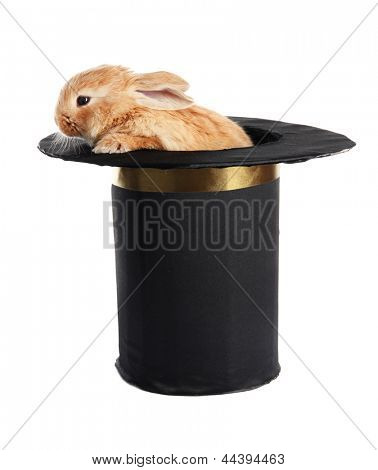 Fluffy foxy rabbit in black cylinder isolated on white