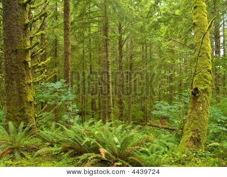 Northwest Rain Forest
