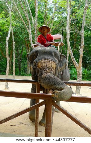 A mahout in charge of elephants waiting for passengers  at the Siam Safari Elephant Camp in Phuket