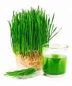 foto of eat grass  - Wheatgrass juice with sprouted wheat on the plate isolated on white background - JPG