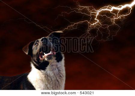 Dog And Lightning