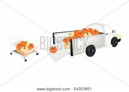 Hand Truck Loading Fresh Pumpkins Into Pickup Truck