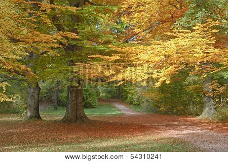 Autumn Landscape With Trail
