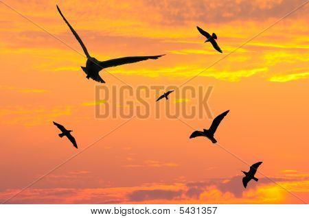 Seagulls In Dusk