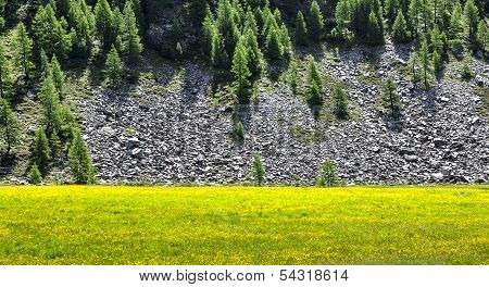 Italy (ayas Valley) Yellow Flowers