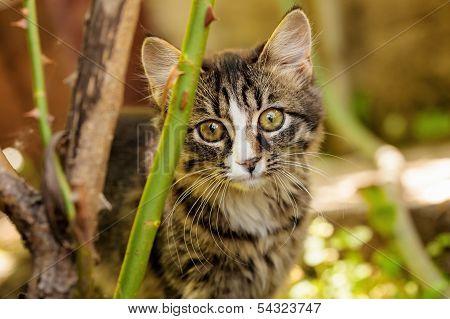 Little Kitten Outdoors