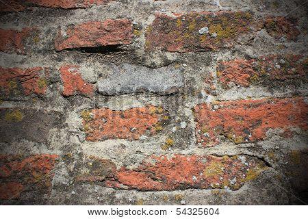 Lichens On Brick Wall