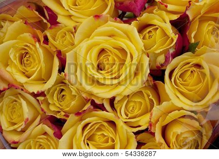 Close up yellow roses