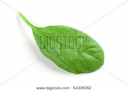 Spinach Leaf Isolated On White Background