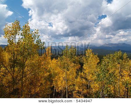Aspens During Autumn